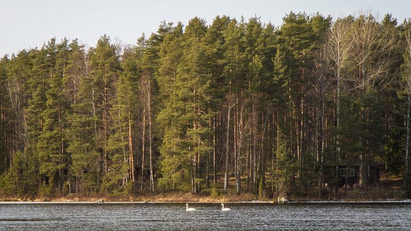 Hirsniemi peninsula